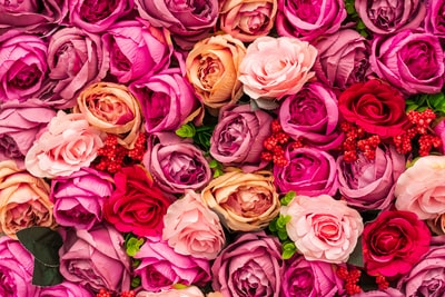 pink and yellow roses in close up photography cesar chavez day zoom background