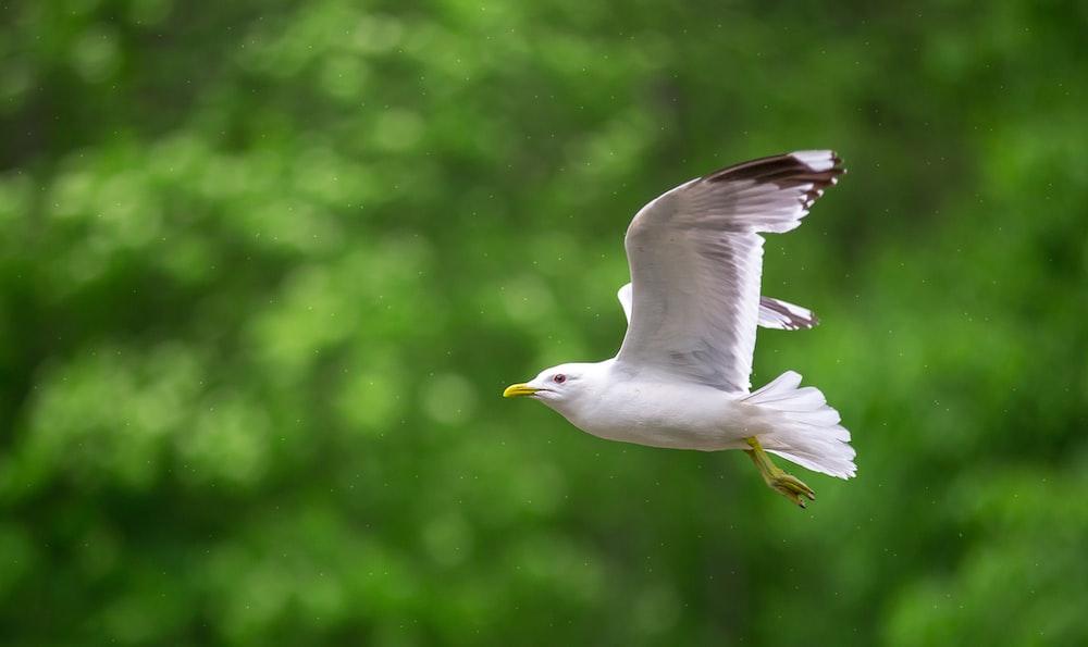 white gull flying during daytime