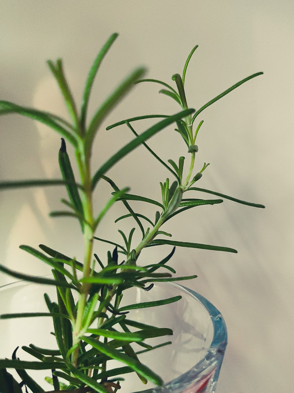 green plant on blue glass vase