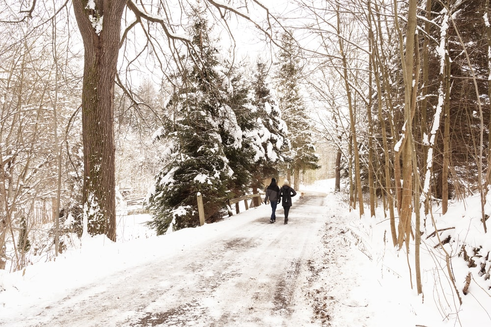 2 person walking on snow covered pathway between trees during daytime