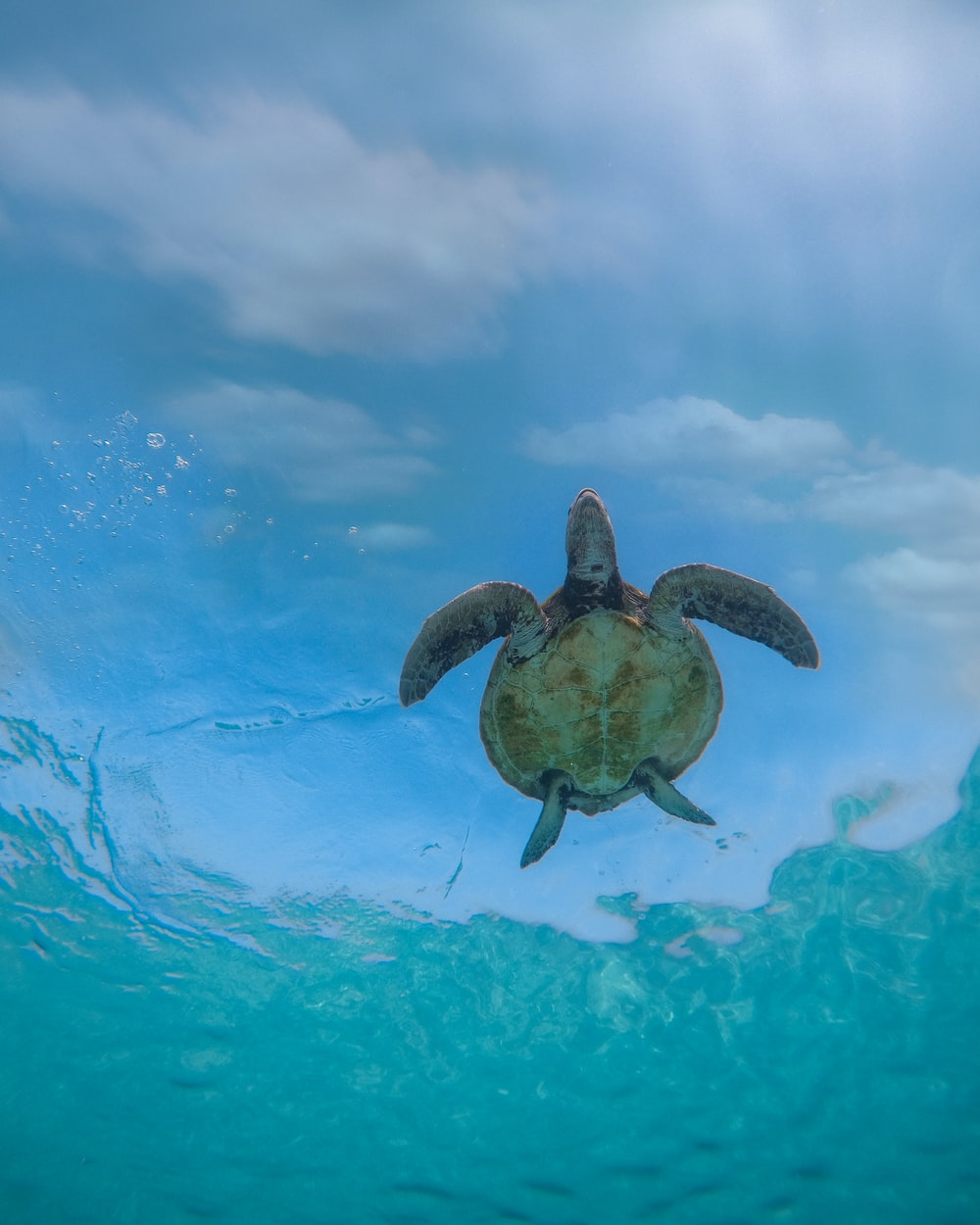 brown turtle in water during daytime
