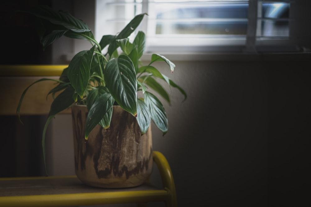green plant on brown ceramic pot