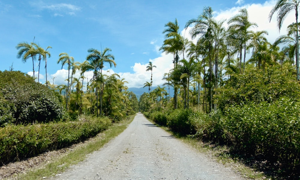 gray dirt road between green trees under blue sky during daytime