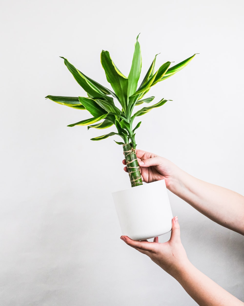 person holding green plant on white pot