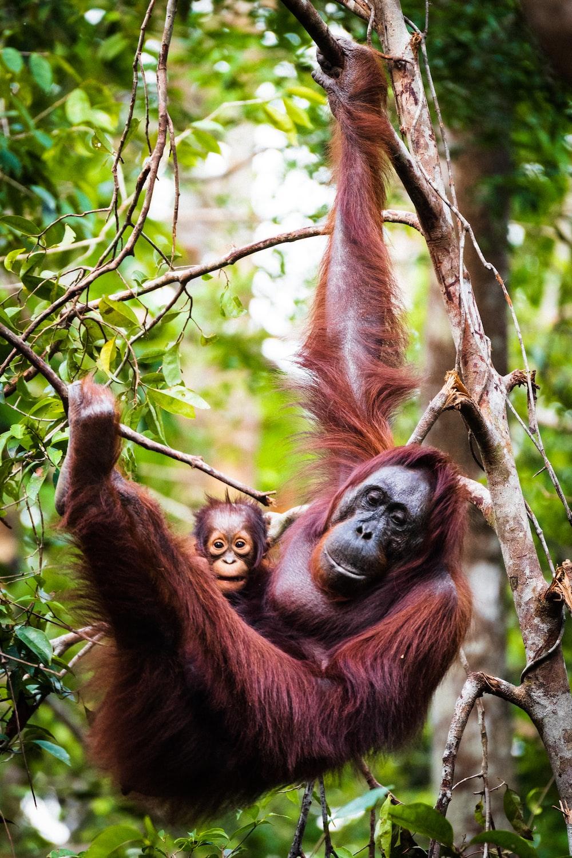 brown monkey on tree branch during daytime