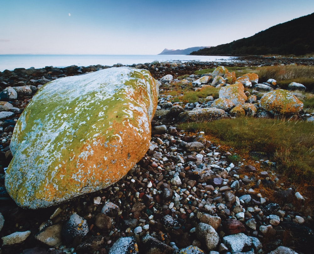 brown rock on rocky shore during daytime