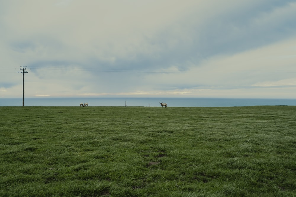 people standing on green grass field under white clouds during daytime