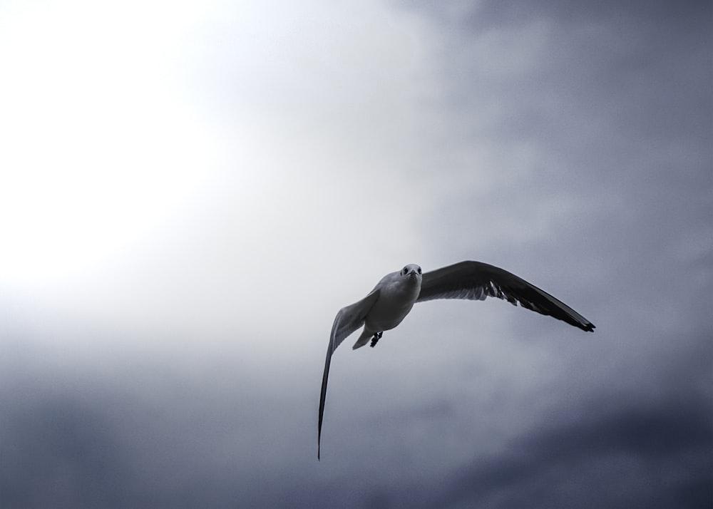 white bird flying under white clouds during daytime