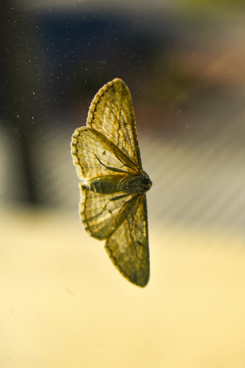 green and black butterfly on white surface