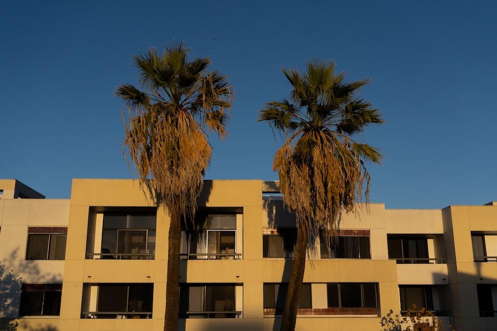 palm tree near beige concrete building