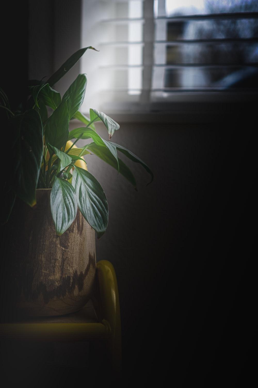 green plant on yellow pot