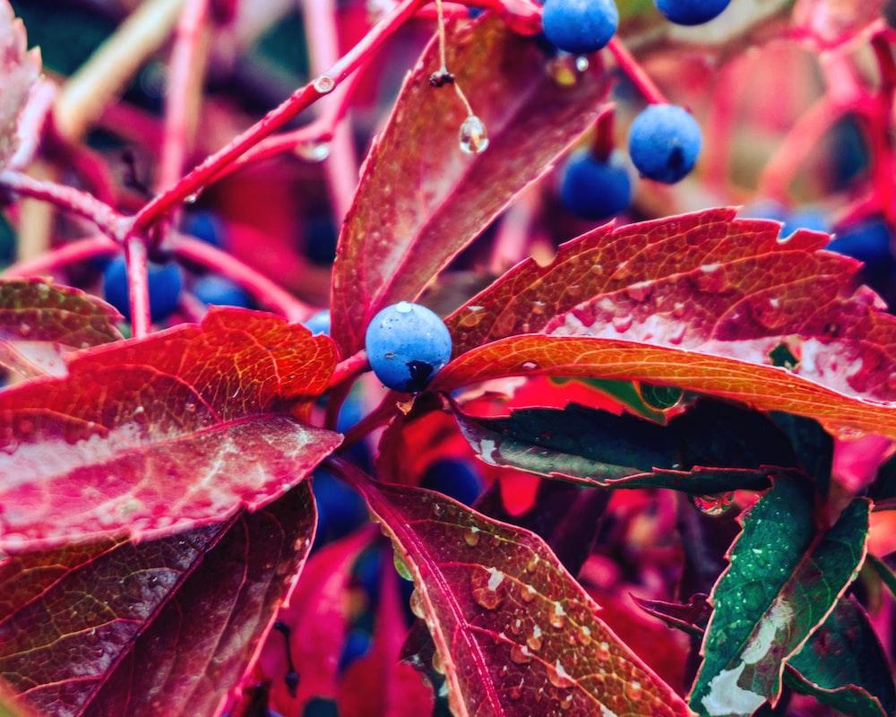 blue round fruit on brown stem