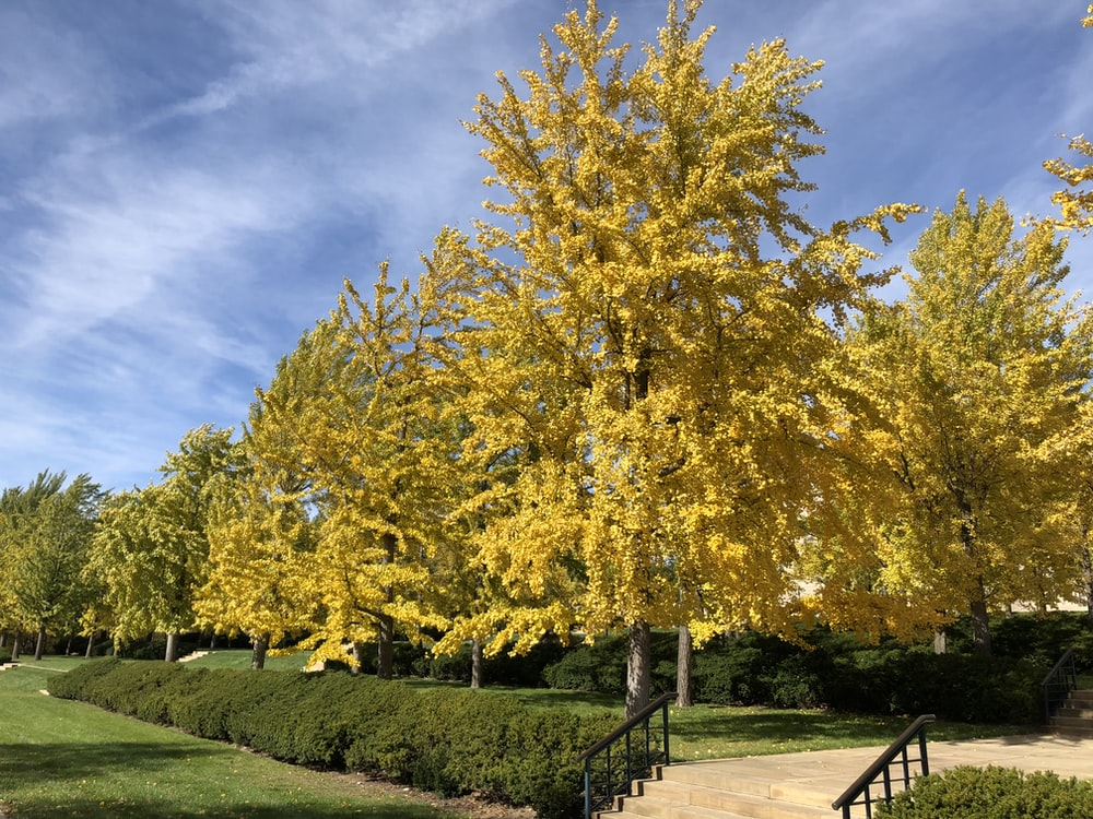 yellow leaf tree on green grass field during daytime