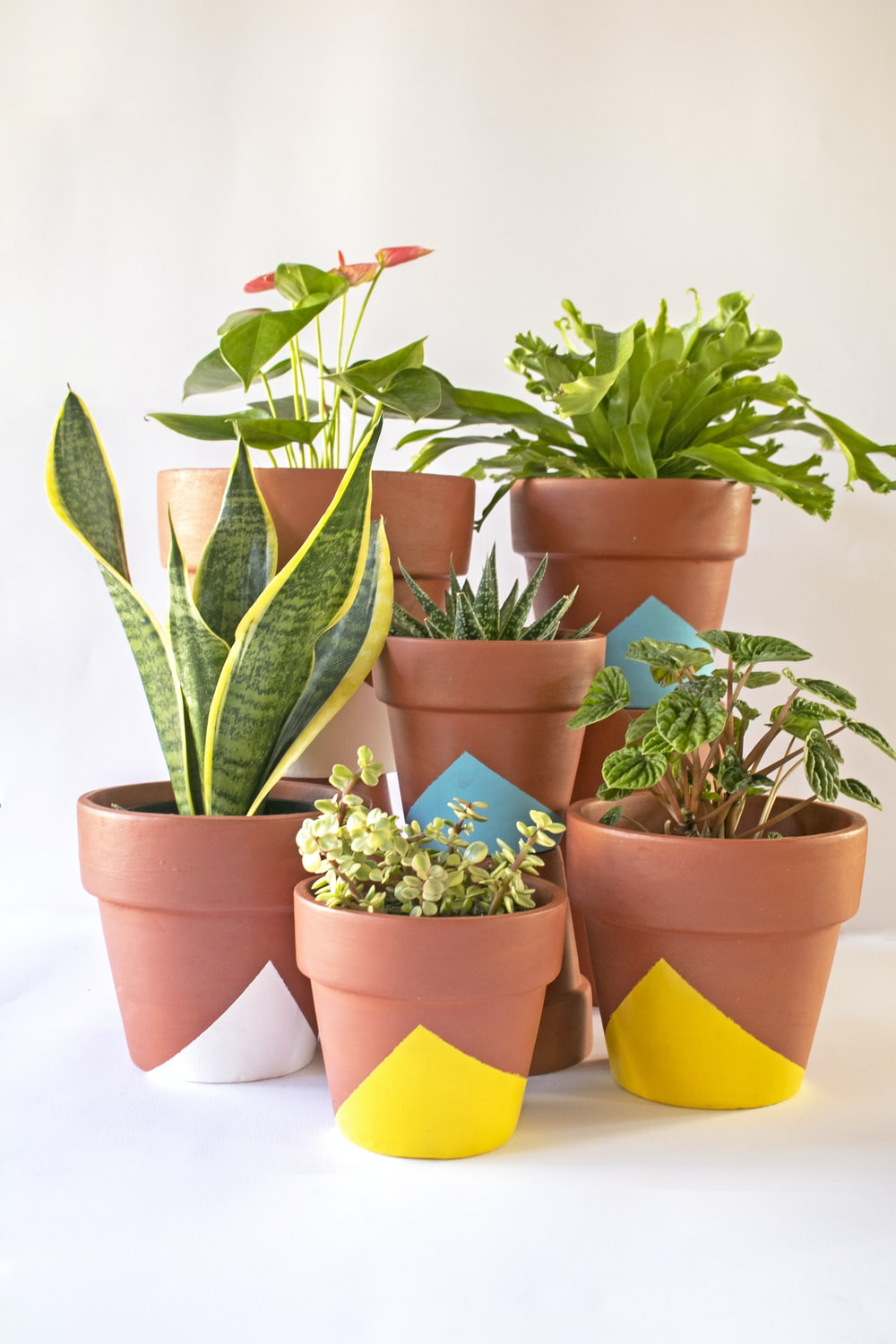 green and orange potted plants