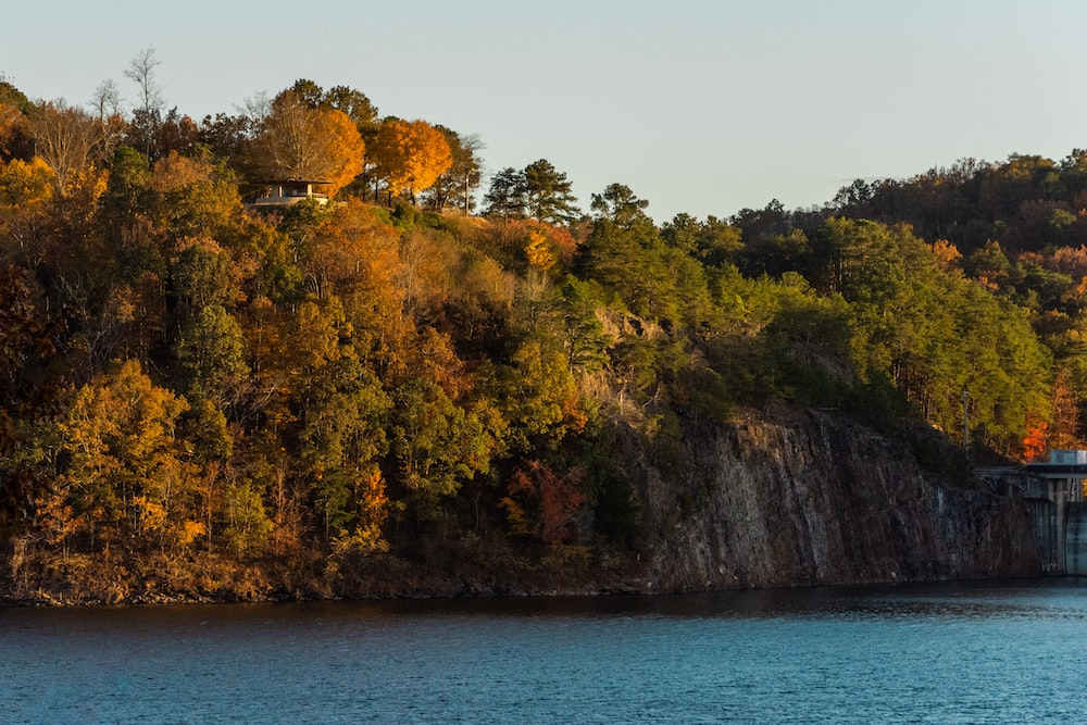 green and brown trees on brown rock formation beside blue sea during daytime
