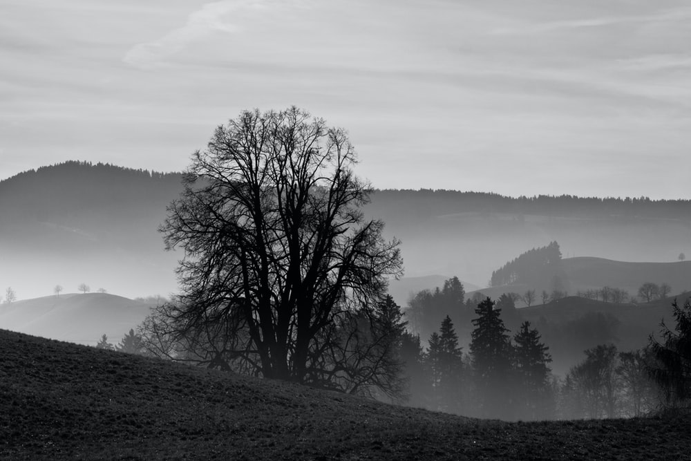 bare tree on hill during foggy day
