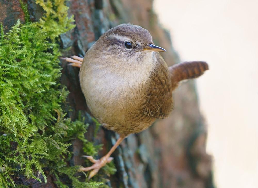 brown bird on green tree
