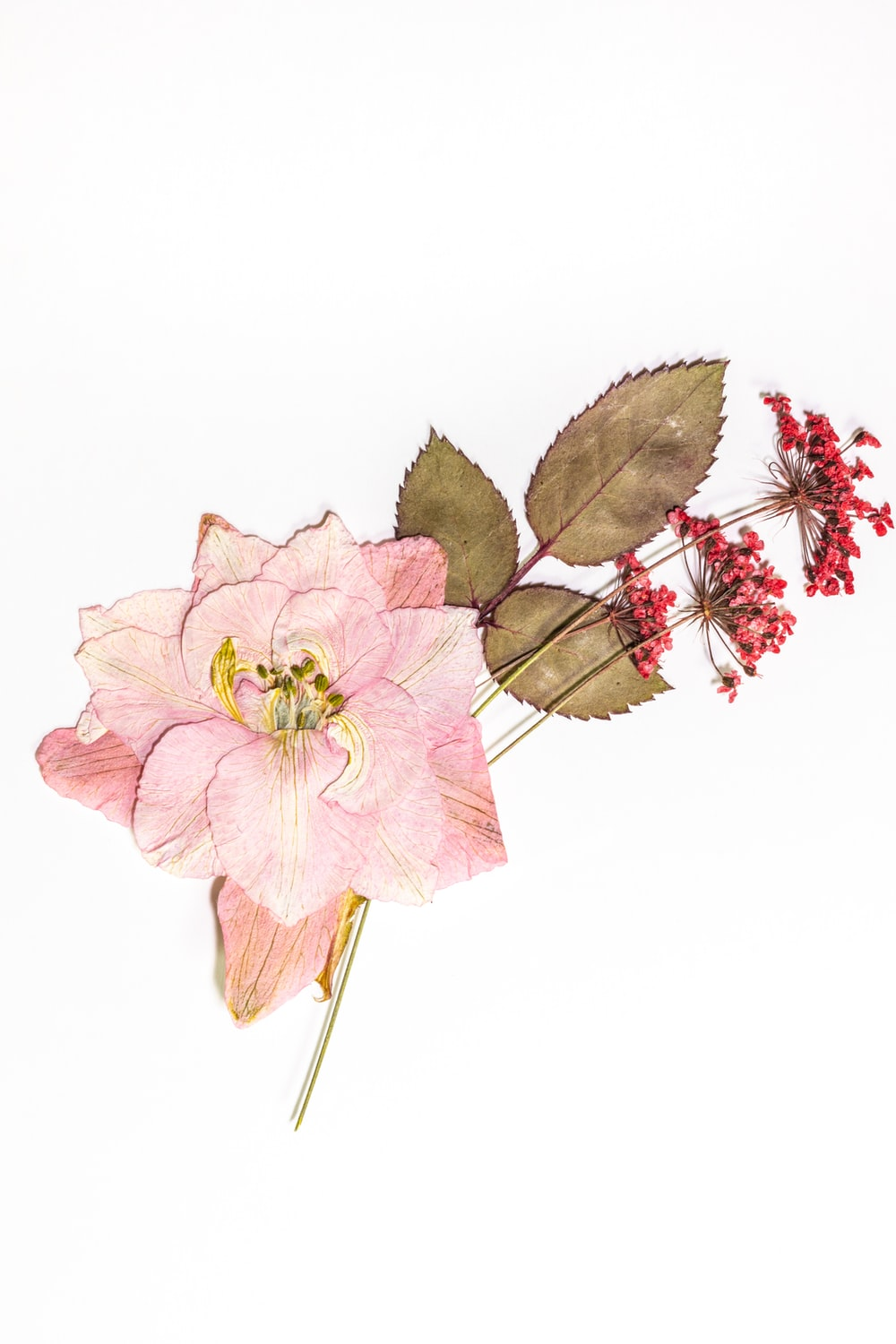 pink and brown flower with white background