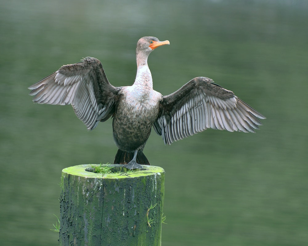 white and black duck on green wooden post