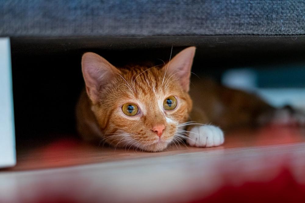 orange tabby cat lying on red textile