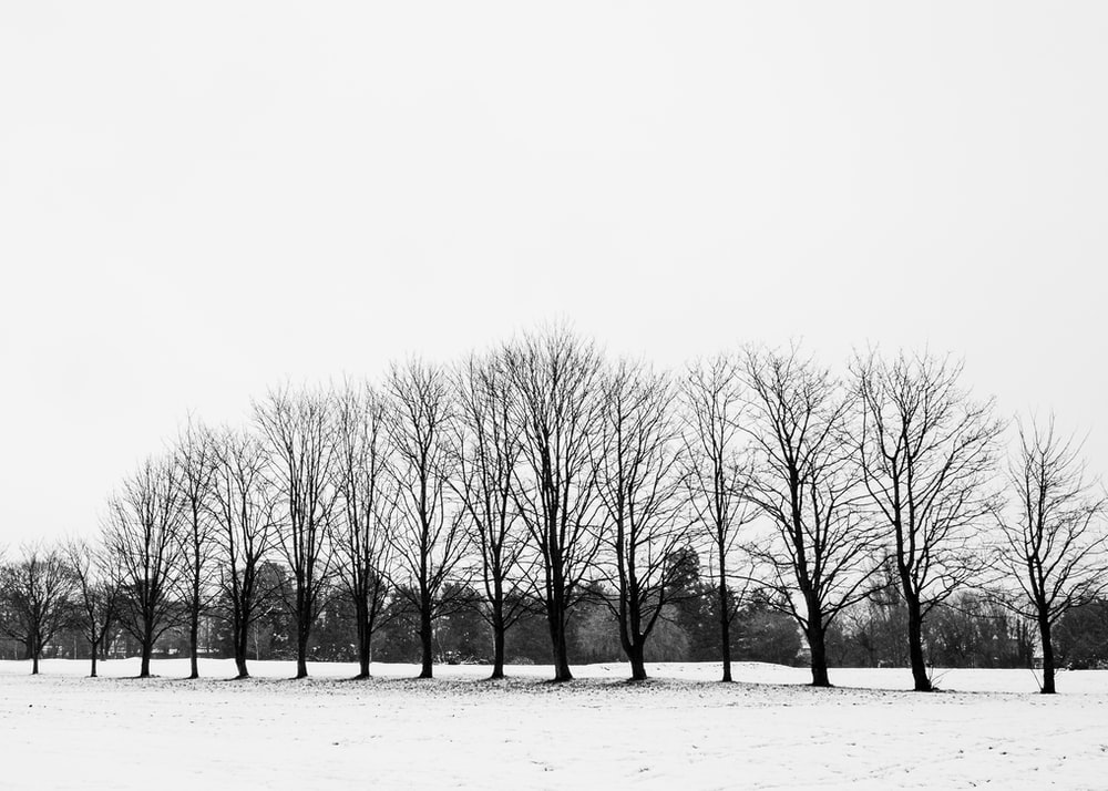 leafless trees on snow covered ground
