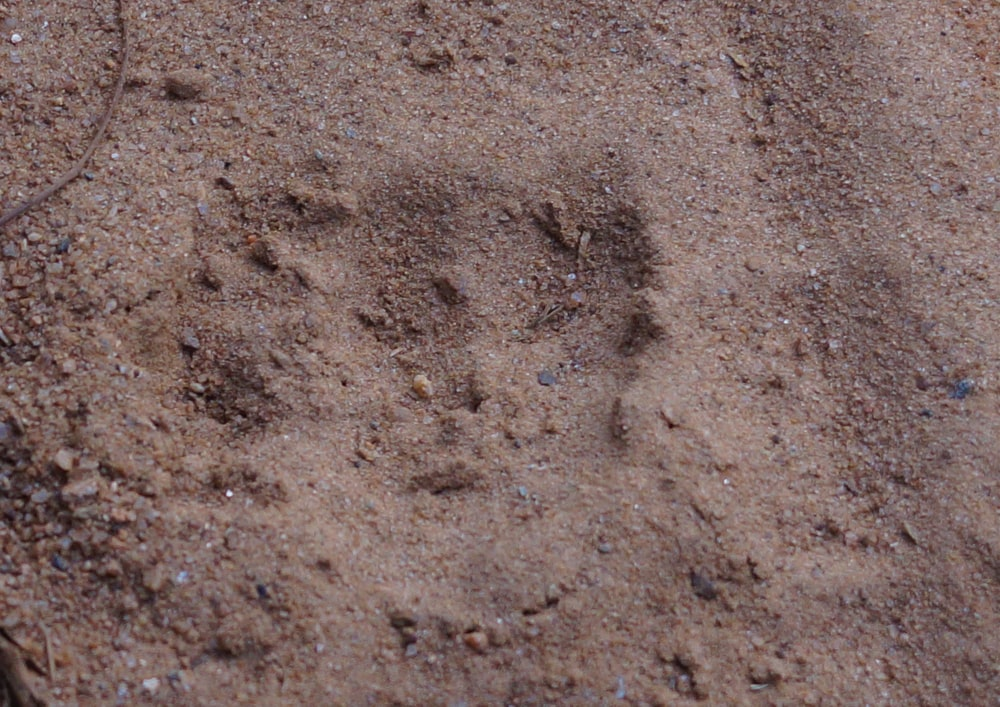 brown sand with heart shaped shadow