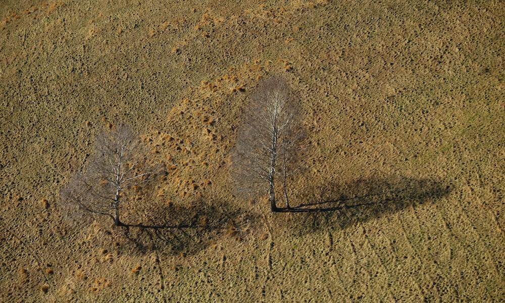 brown dried leaves on brown sand