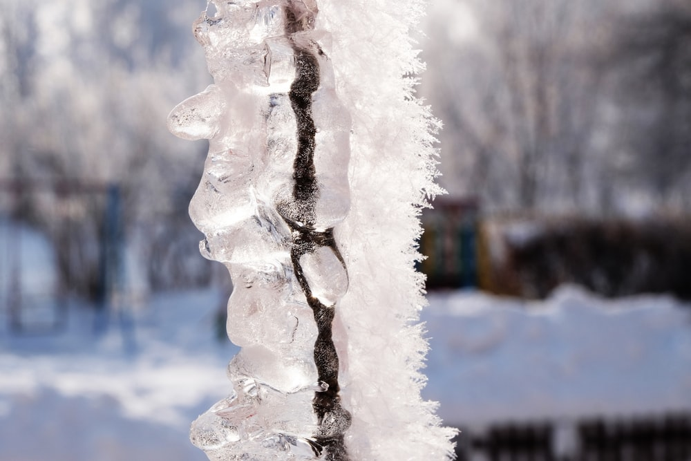 white ice on tree branch