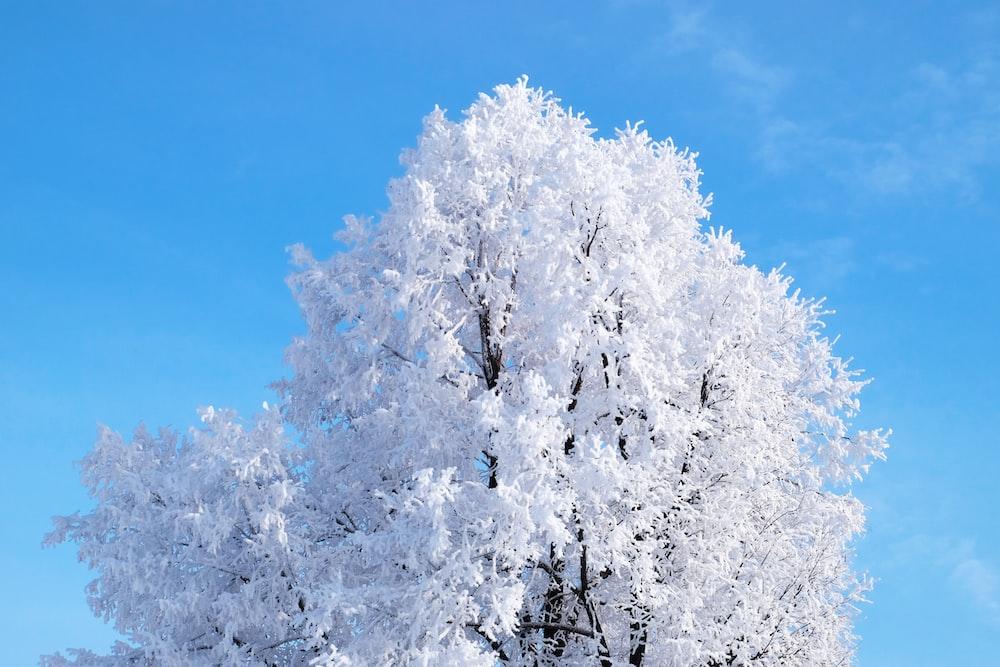 white leaf trees under blue sky during daytime