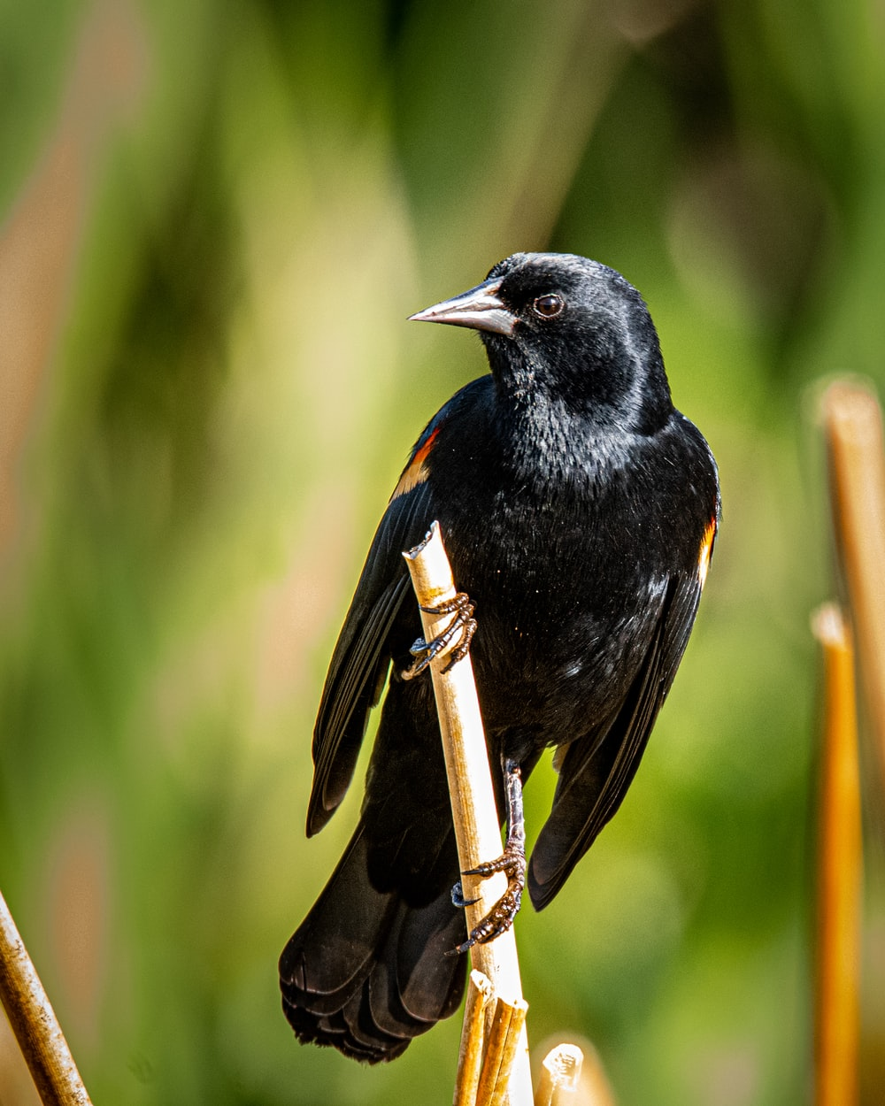 black bird on brown tree branch