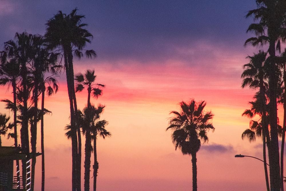 palm tree under orange sky