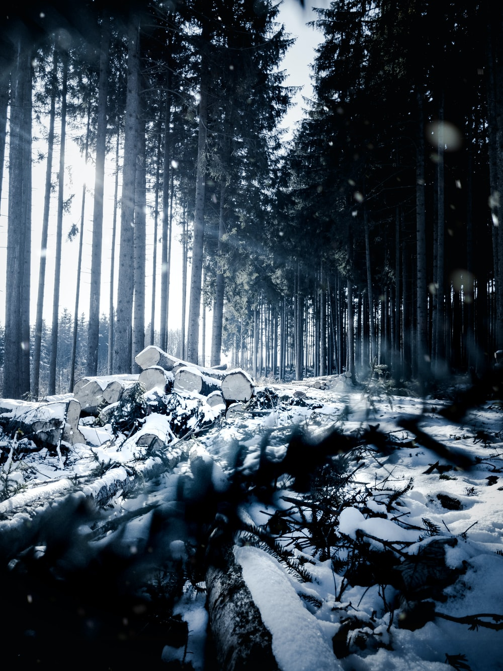 snow covered ground in forest