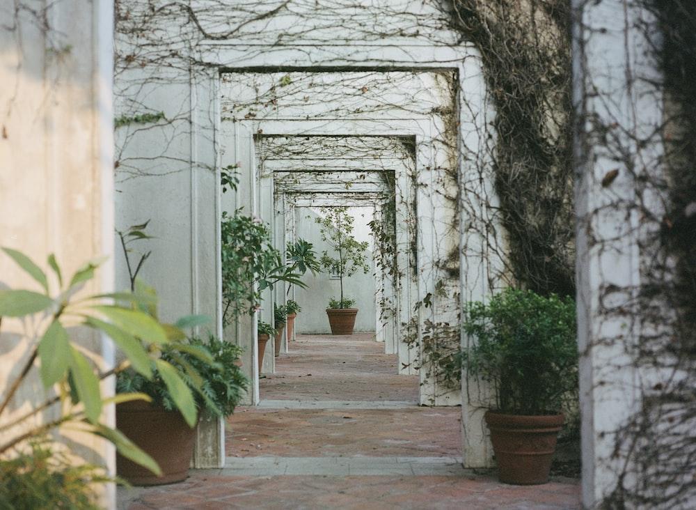 gray concrete hallway between green trees