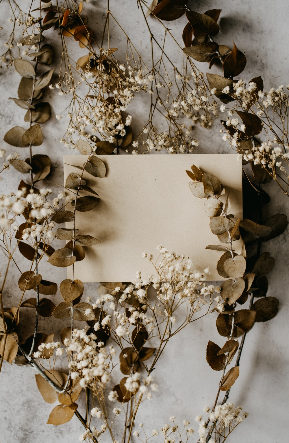 white flowers on white wall