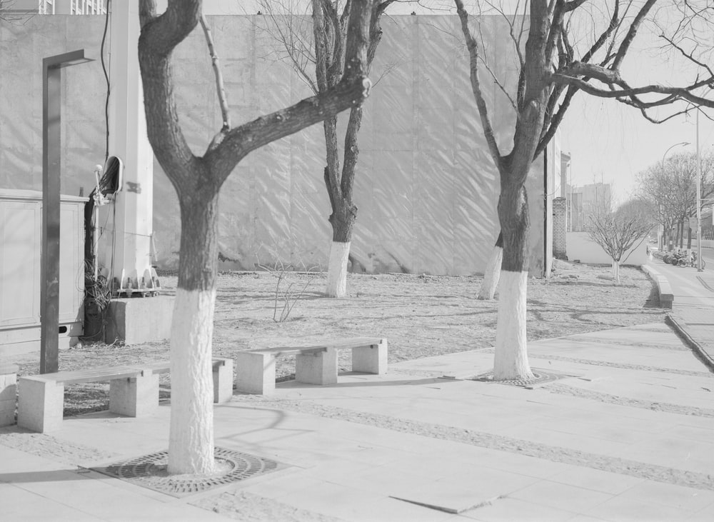 grayscale photo of tree on the park