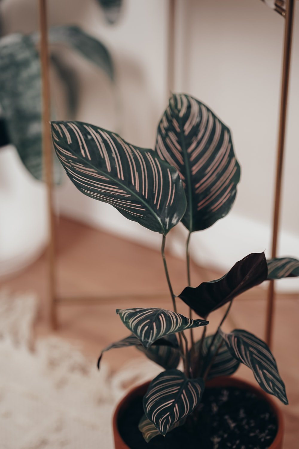 green and black leaf plant