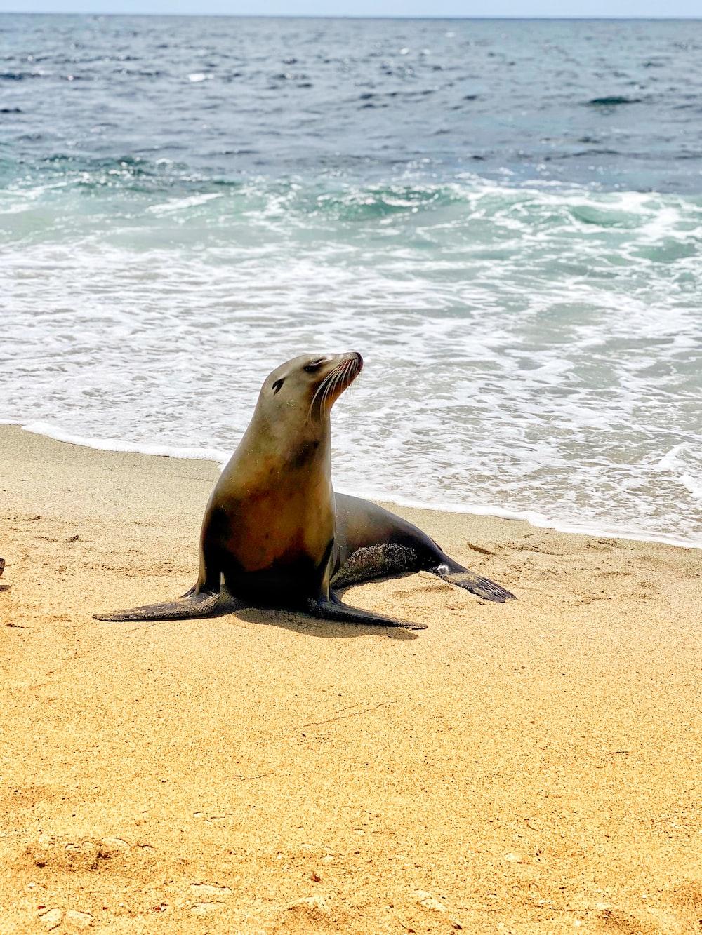 seal on white sand during daytime