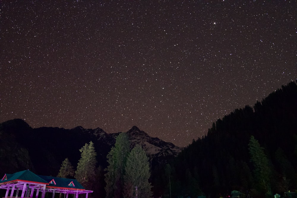 green trees and mountain during night time