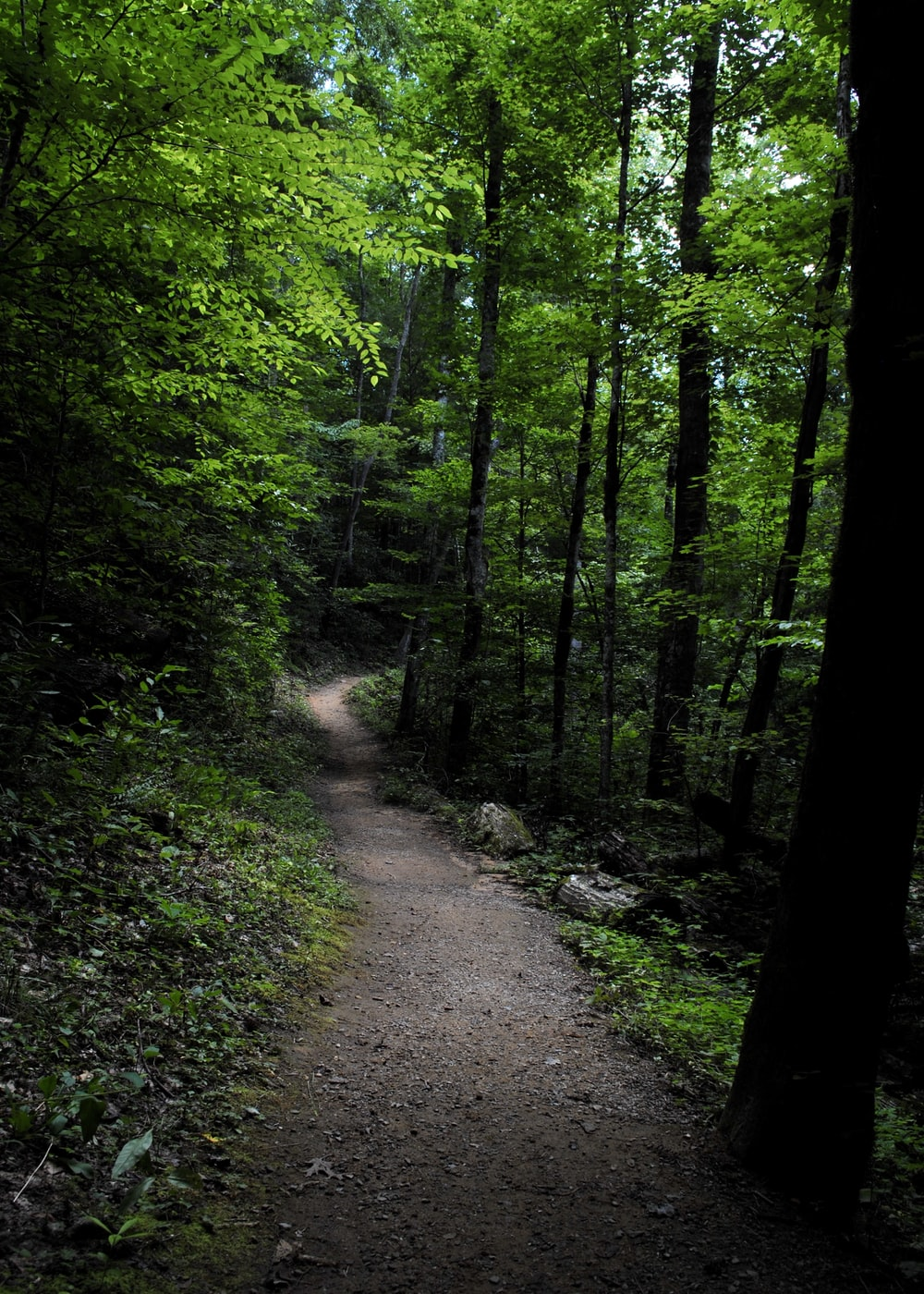 pathway in the middle of forest