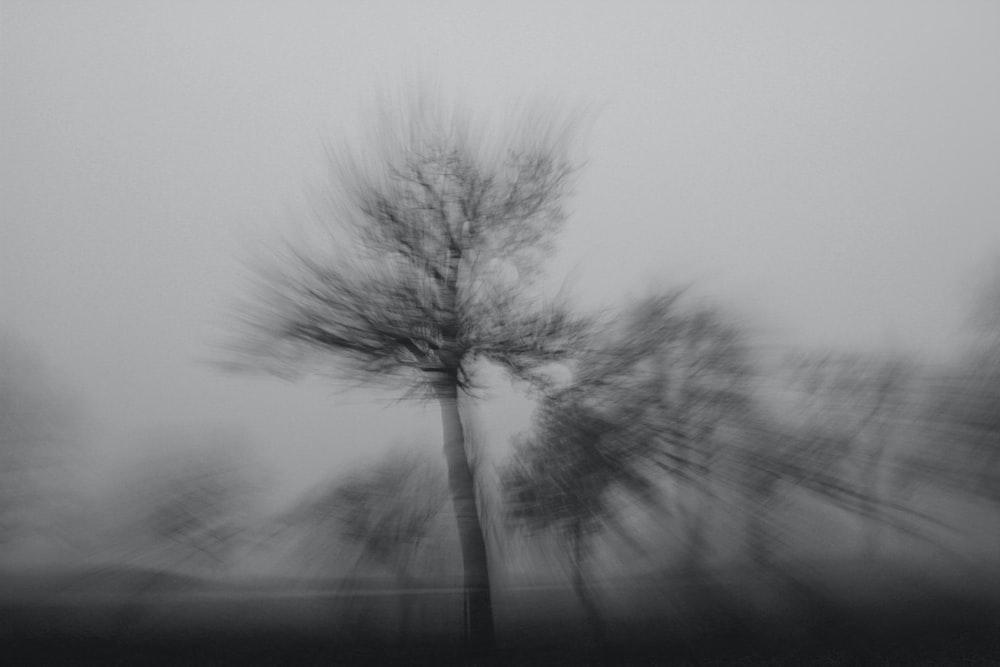 grayscale photo of tree on fog