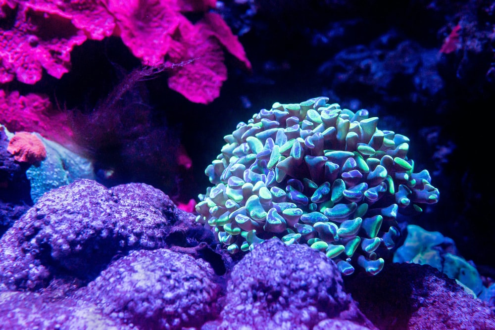 green and blue coral reef