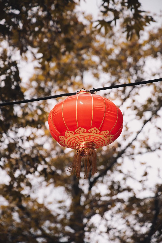 red lantern hanging on tree branch during daytime