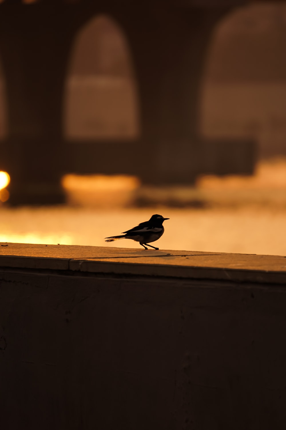 black bird on brown wooden fence during sunset