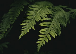 green leaves in dark room
