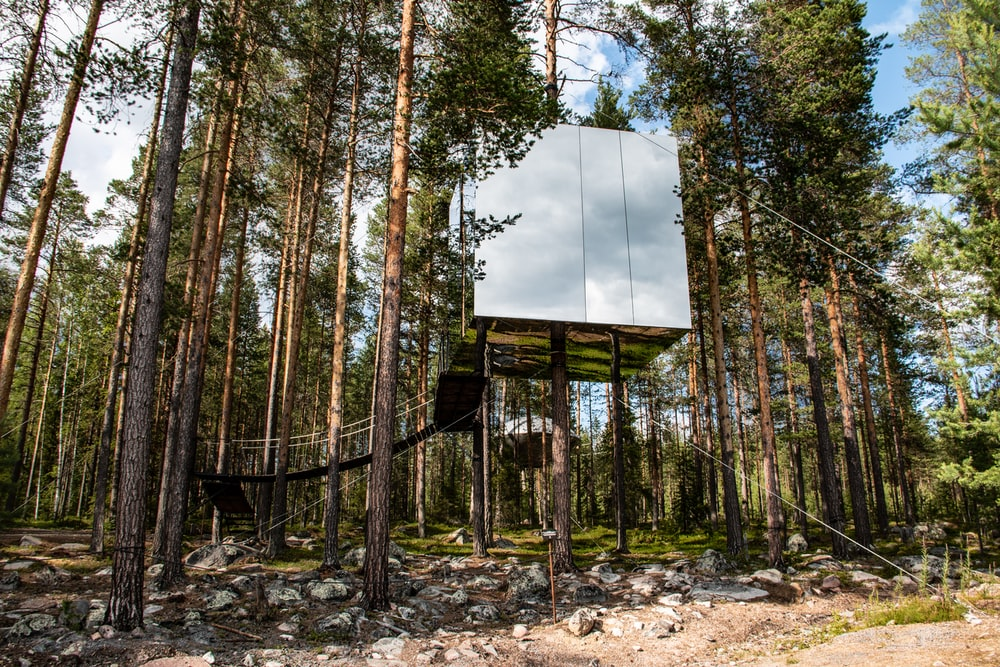 brown wooden house in forest during daytime