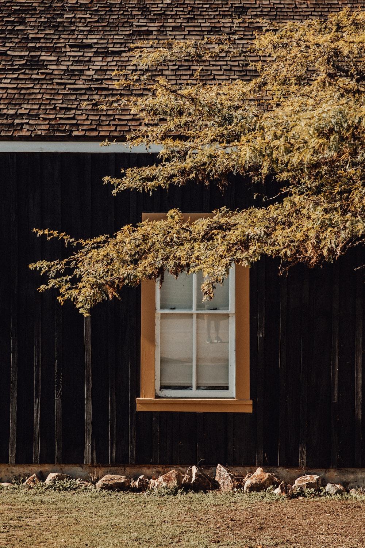 brown tree near white wooden window