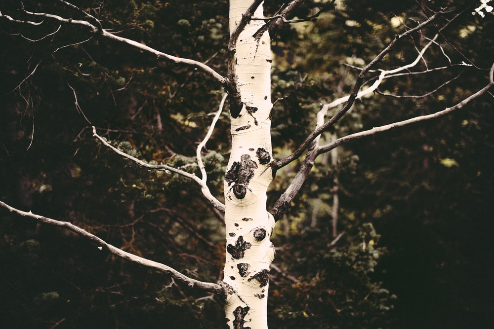 white and brown tree branch
