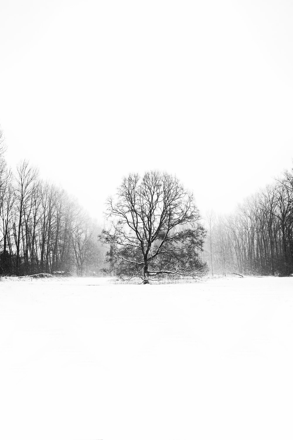 grayscale photo of trees and grass