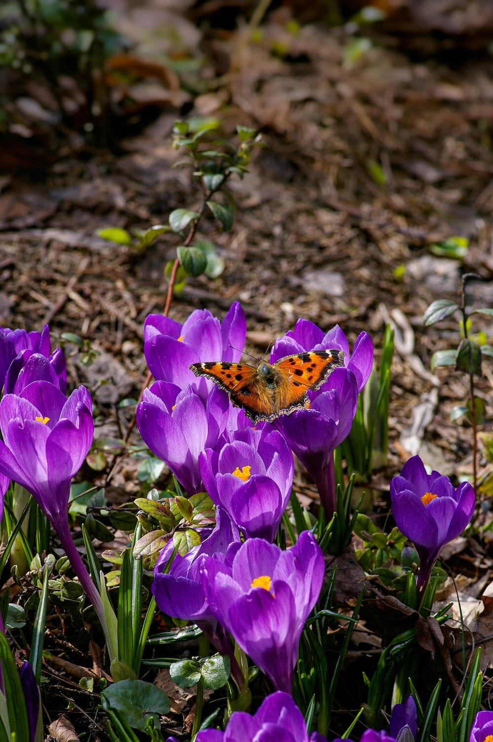 brown butterfly on purple flower