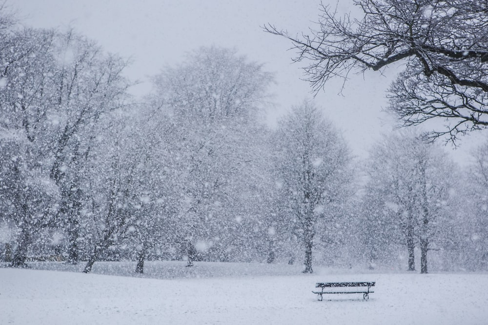 black bench on snow covered ground